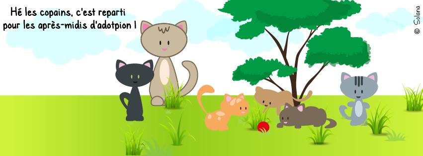 Journée adoption de chat
